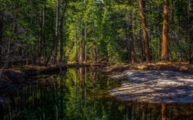 Картинка лес, деревья, природа, река