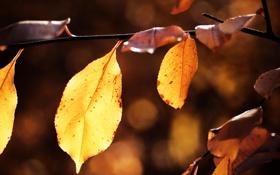 Картинка осень, листья, природа, листок, листки, макро фотографии, осенние обои