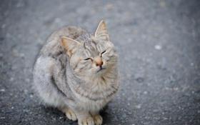 Обои кошка, кот, асфальт, зажмурилась