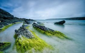 Картинка камни, скалы, небо, отлив, водоросли, море