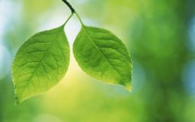 Картинка листья, макро, природа, фото, весна, весенние обои, обои для рабочего стола