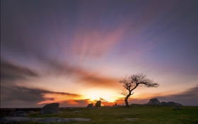 Обои небо, трава, солнце, закат, природа, камни, дерево
