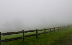 Обои трава, фото, обои, заборы, деревья, туман, природа