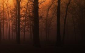 Картинка лес, деревья, пейзаж, природа, парк, скамейки, wood