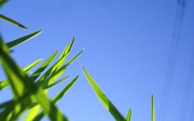 Обои небо, трава, природа