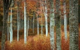 Обои лес, деревья, осень, природа