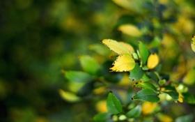 Обои листья, ветки, purity of the soul