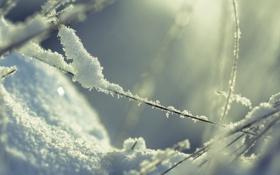 Картинка зима, трава, макро, свет, снег