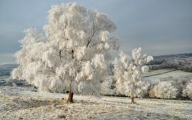 Обои зима, иней, снег, деревья, природа, дерево