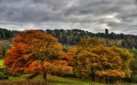 Обои лес, осень, пасмурно, деревья