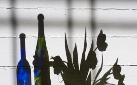 Картинка цветы, доски, тень, пол, бутылки