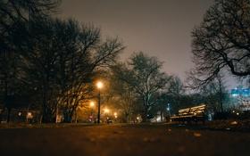 Обои деревья, ночь, парк, путь, скамейки, фонарный столб