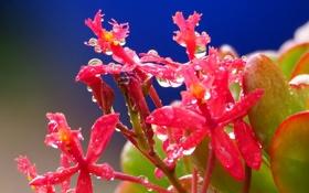 Обои капли, цветок, соцветие, вода, лепестки
