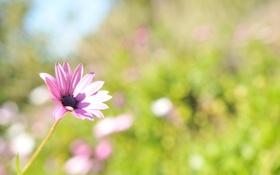 Картинка зелень, цветок, лето, свет, природа, блики, розовый