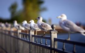 Обои beach, depth of field, Flock of Seagulls