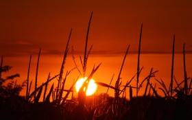 Картинка поле, небо, солнце, закат, кукуруза