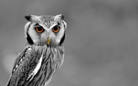 Обои зима, животные, природа, сова, птица
