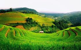 Обои пейзаж, горы, поля, зеленые, хижина, Вьетнам