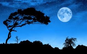 Картинка пейзаж, ночь, луна, силуэты