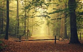 Обои дорога, осень, лес, листья, деревья, туман, забор