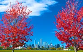 Обои США, осень, трава, небо, листья, город, деревья
