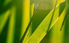 Обои трава, свет, Зеленая, яркая