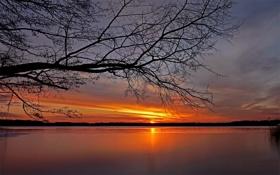Картинка небо, закат, ветки, озеро, дерево, даль, горизонт