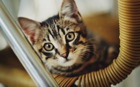 Картинка кошка, кот, шерсть