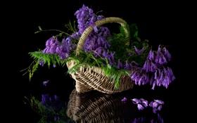 Картинка листья, цветы, корзина, букет, цветение