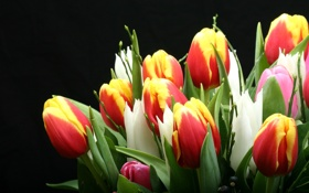 Обои бутоны, букет, тюльпаны