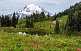 Обои трава, деревья, цветы, озеро, поляна, гора, снежная