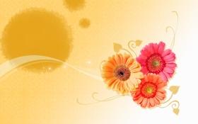 Картинка линии, цветы, коллаж, обои, герберы, заставка, открытка
