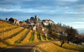 Картинка дорога, пейзаж, дома, виноградник