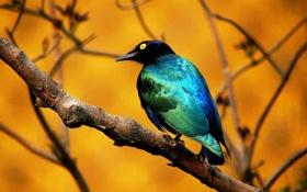 Картинка птица, ветка, клюв