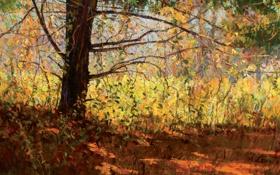 Картинка пейзаж, осень, ветки, Peter Fiore, тень, дерево, листья