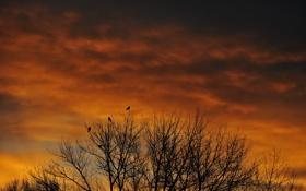 Картинка небо, облака, деревья, птицы, вечер, силуэт, зарево