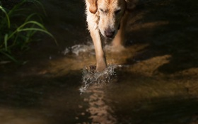 Картинка вода, фон, собака