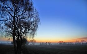 Картинка поле, деревья, рассвет, весна, утро, всходы, ранняя