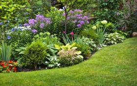 Обои природа, клумба, цветы