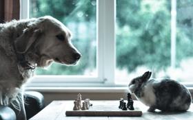 Обои настроение, собака, кролик, шахматы