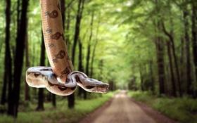 Обои дорога, лес, змея