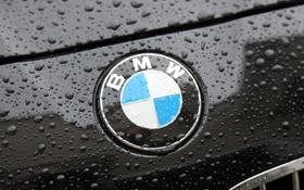 Обои Макро, Капли, Фото, BMW, БМВ, Капот, Эмблема