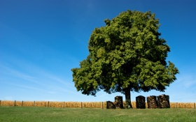Обои поле, трава, деревья, природа, обои, доски, брёвна
