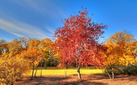 Обои небо, парк, трава, деревья, осень