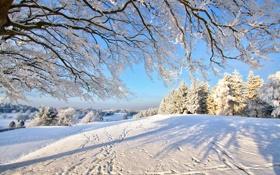 Обои зима, лес, снег, ветки, дерево