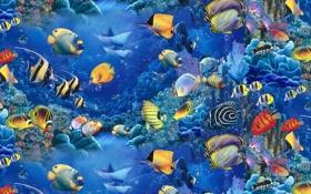 Обои море, рыбки, голубое, аквариум, красиво, Lassen, Christian Riese