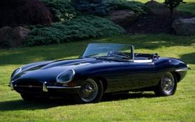 Обои газон, Jaguar, Ягуар, E-Type, классика, кусты, передок