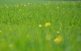 Обои зелень, трава, макро, цветы, свежесть, природа, поля