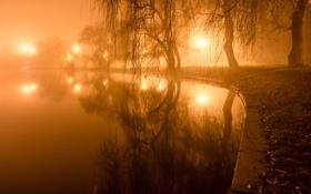 Картинка свет, деревья, огни, туман, пруд, парк, вечер