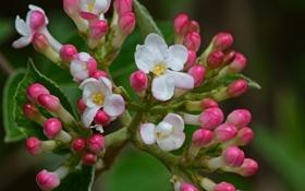 Обои цветок, макро, Burning Bush